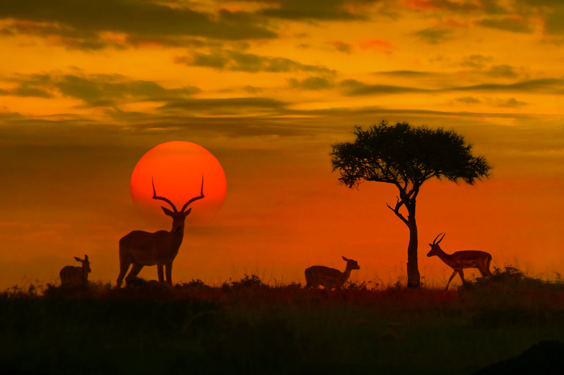 silhouette of antelopes at sunset in Africa